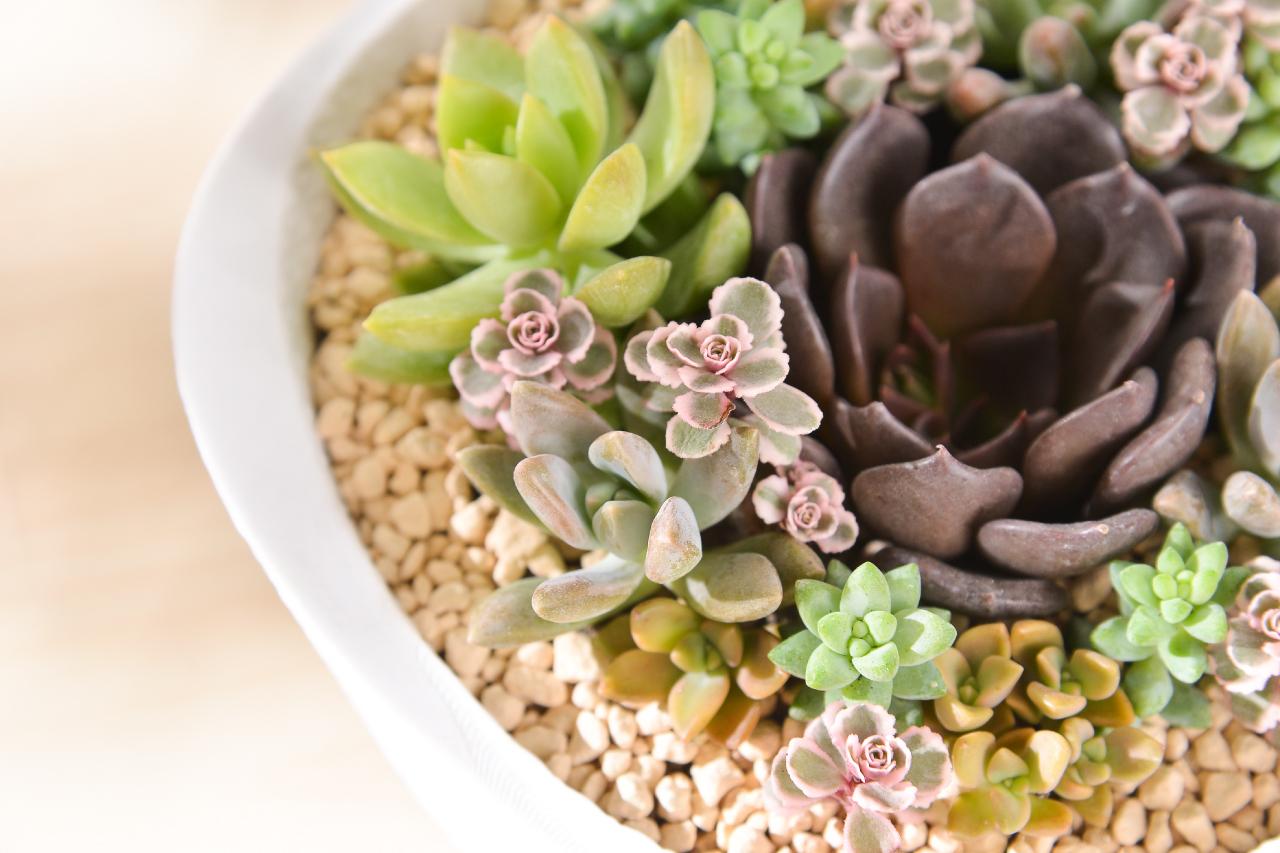 精選多肉植物,當季多肉植物組合而成的盆栽最健康好照顧