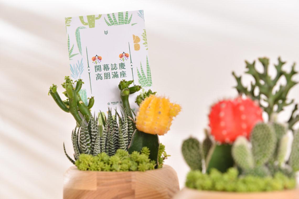 緋牡丹錦 珊瑚大戟 白屋帽子 鹿角珊瑚 十二之卷 黃金萬年草 仙人掌 開幕組盆 開幕花禮