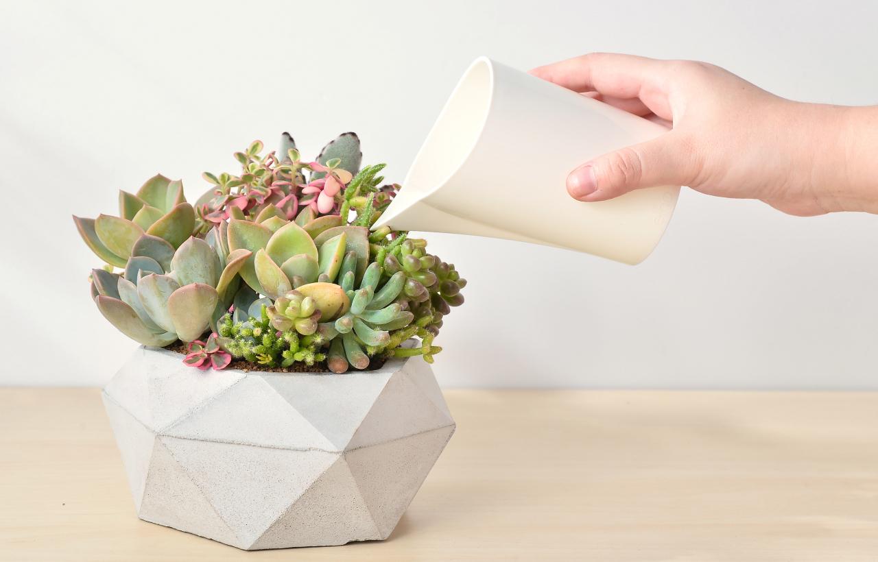 多肉植物組合盆栽照顧方式:兩週澆一次水