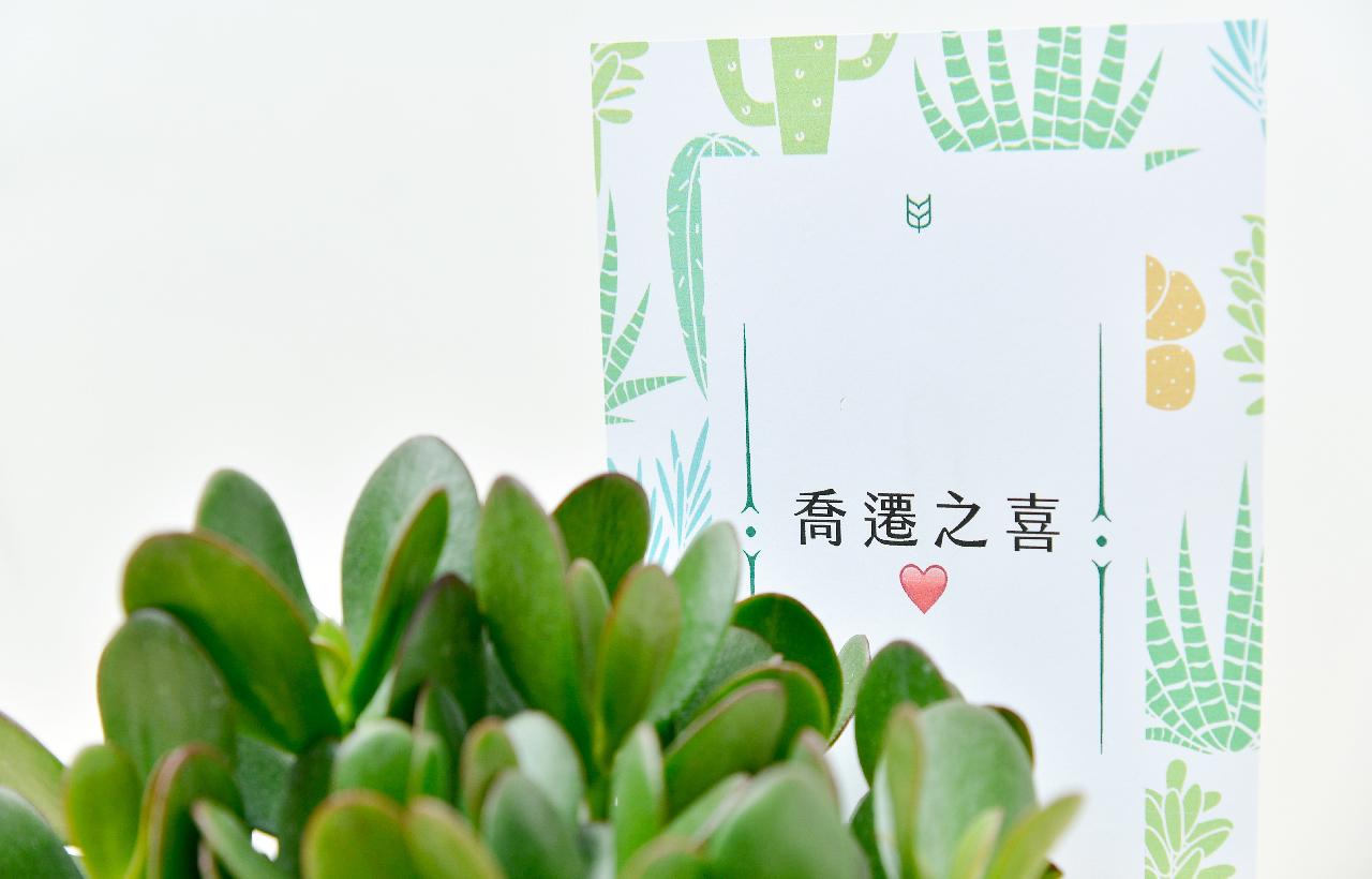發財樹 – 大城堡盆栽 8