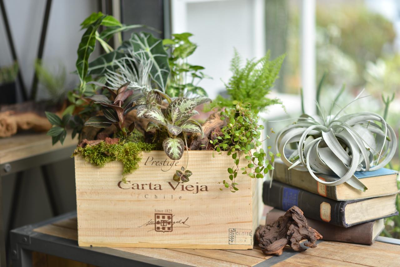 適合擺放在室內的開幕送禮盆栽,當作入厝送禮也很棒