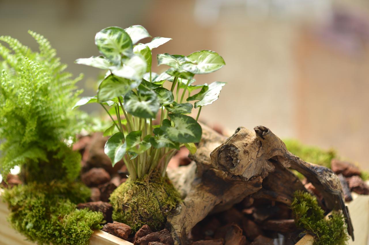 苔球是很有造型感的花藝技巧,很好照顧也很可愛