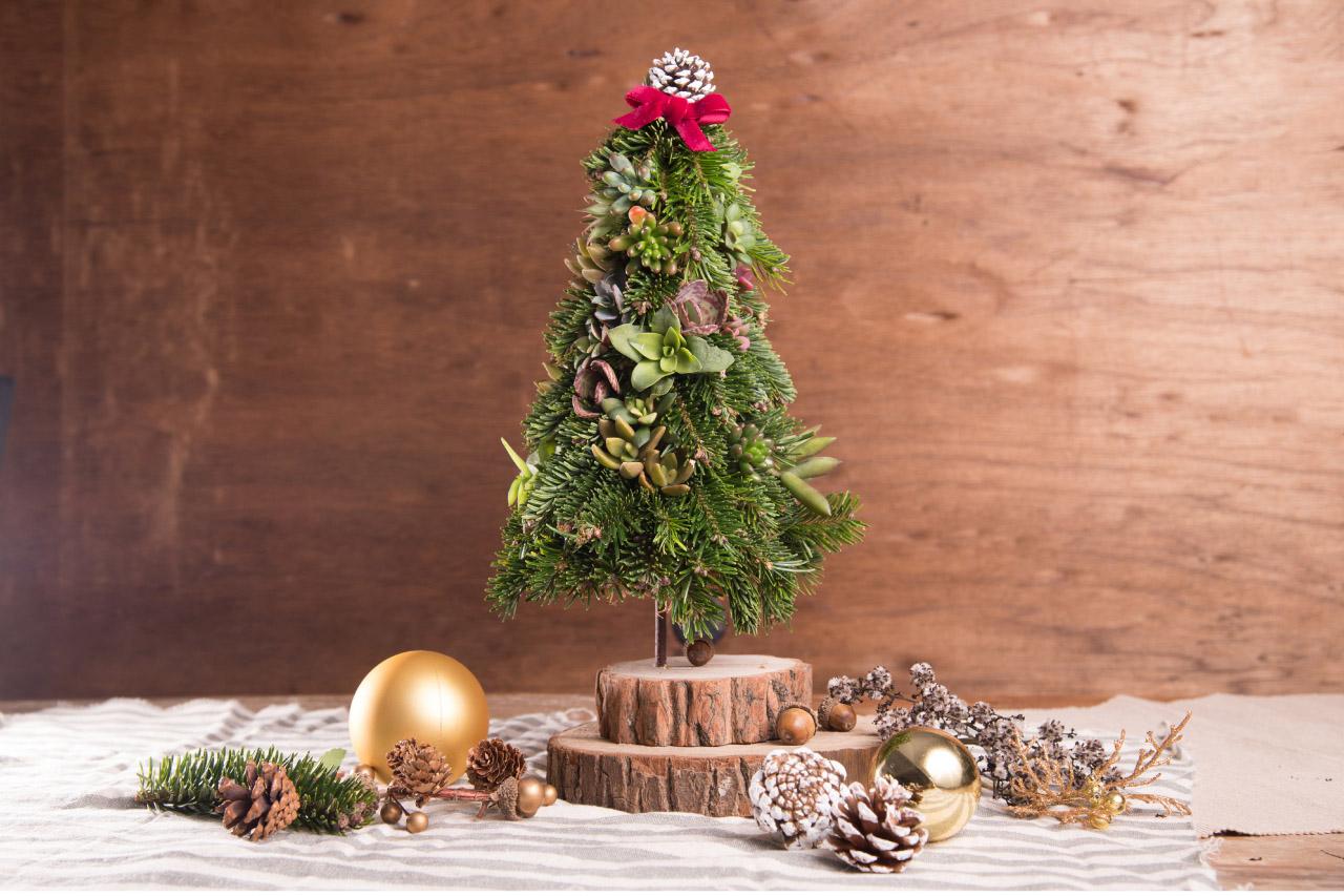 諾貝松多肉聖誕樹 1拷貝