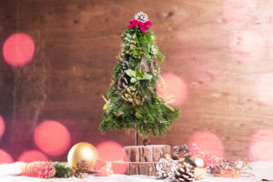 多肉迷你聖誕樹商品販售,擺上一盆多肉聖誕樹,整個餐桌的氣氛完全不同,滿滿的聖誕氣息,開心談笑吧