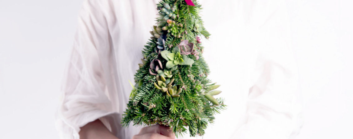 多肉聖誕樹,手捧著這株小小的聖誕樹,迷你的聖誕樹真的超可愛