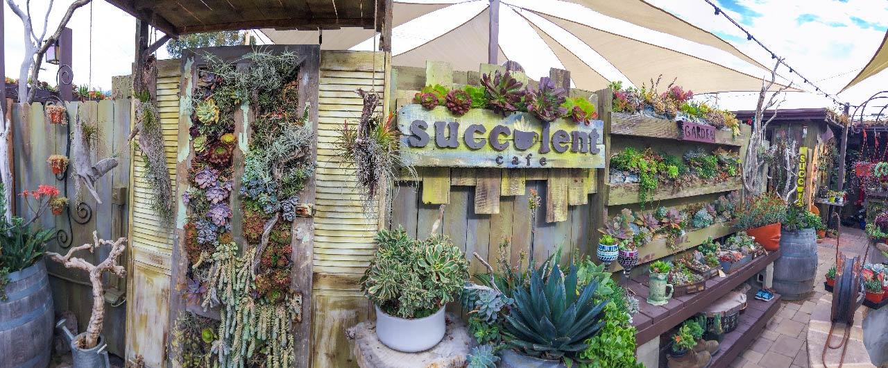 succulents cafe
