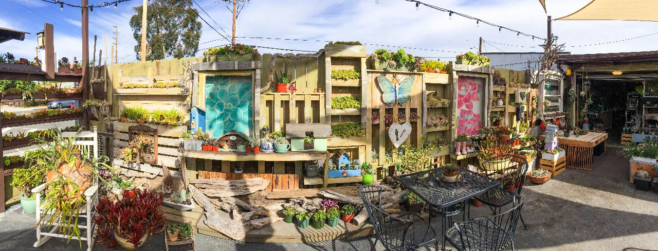 多肉植物咖啡館
