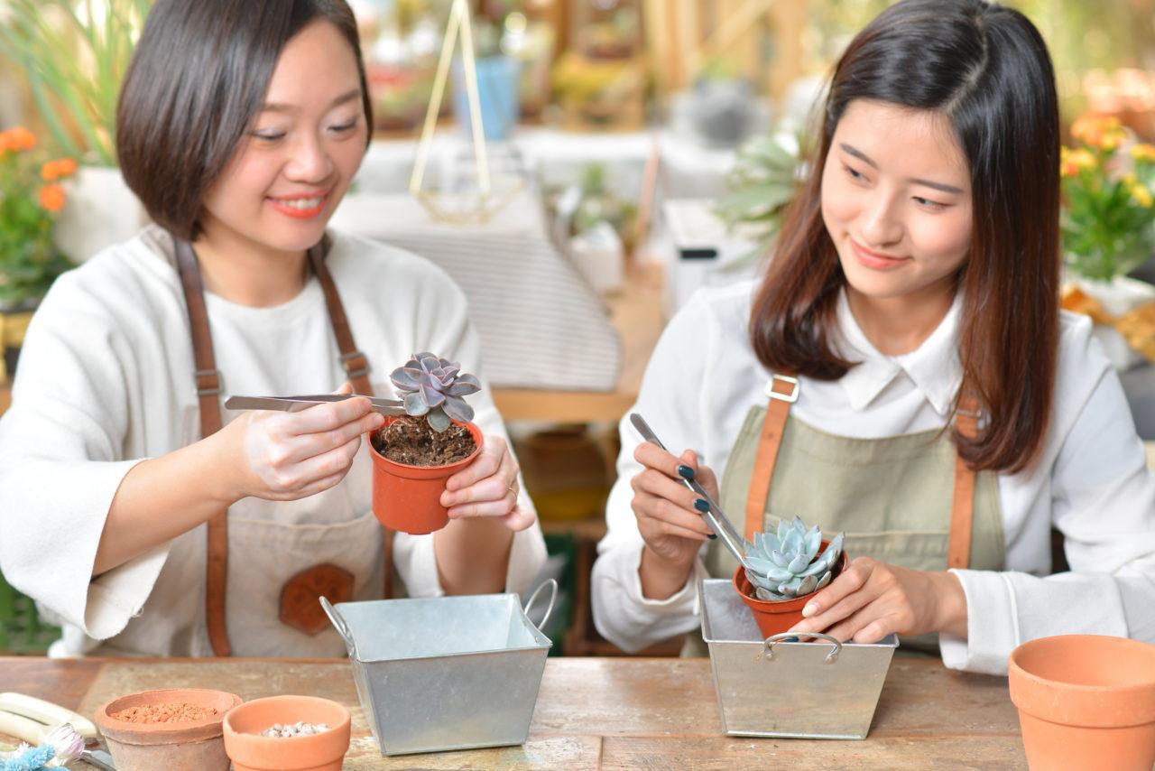 多肉植物移盆換盆體驗課