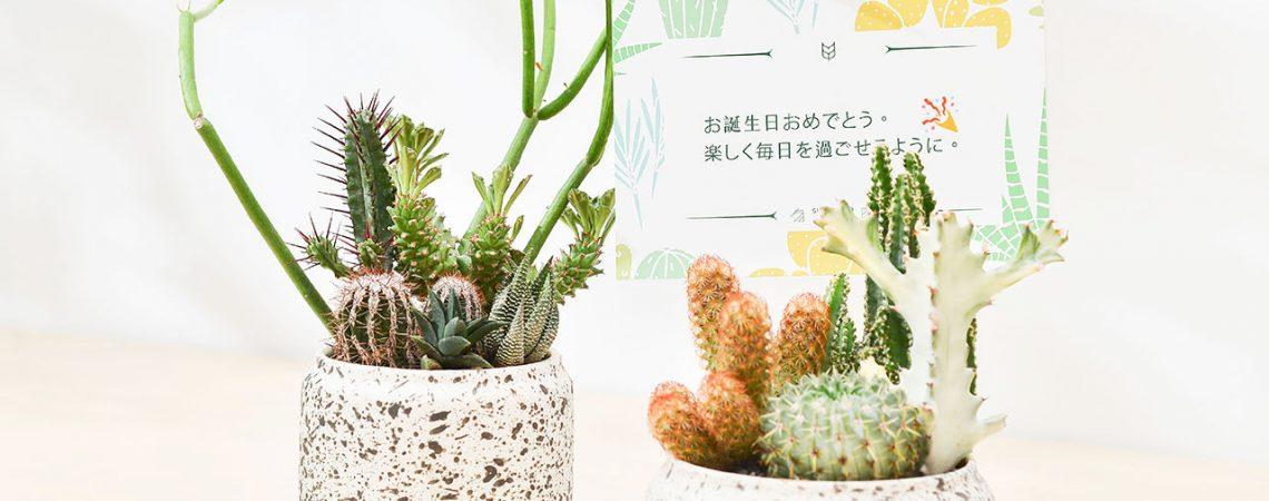 除了說生日快樂,更多日文祝賀詞! 10
