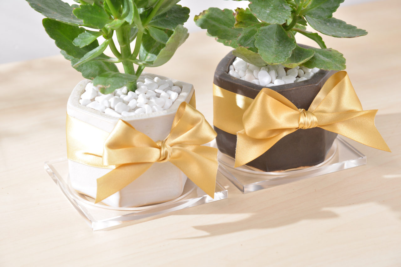 長壽花盆栽搭配高質感的壓克力接水盤,讓盆栽質感更提升