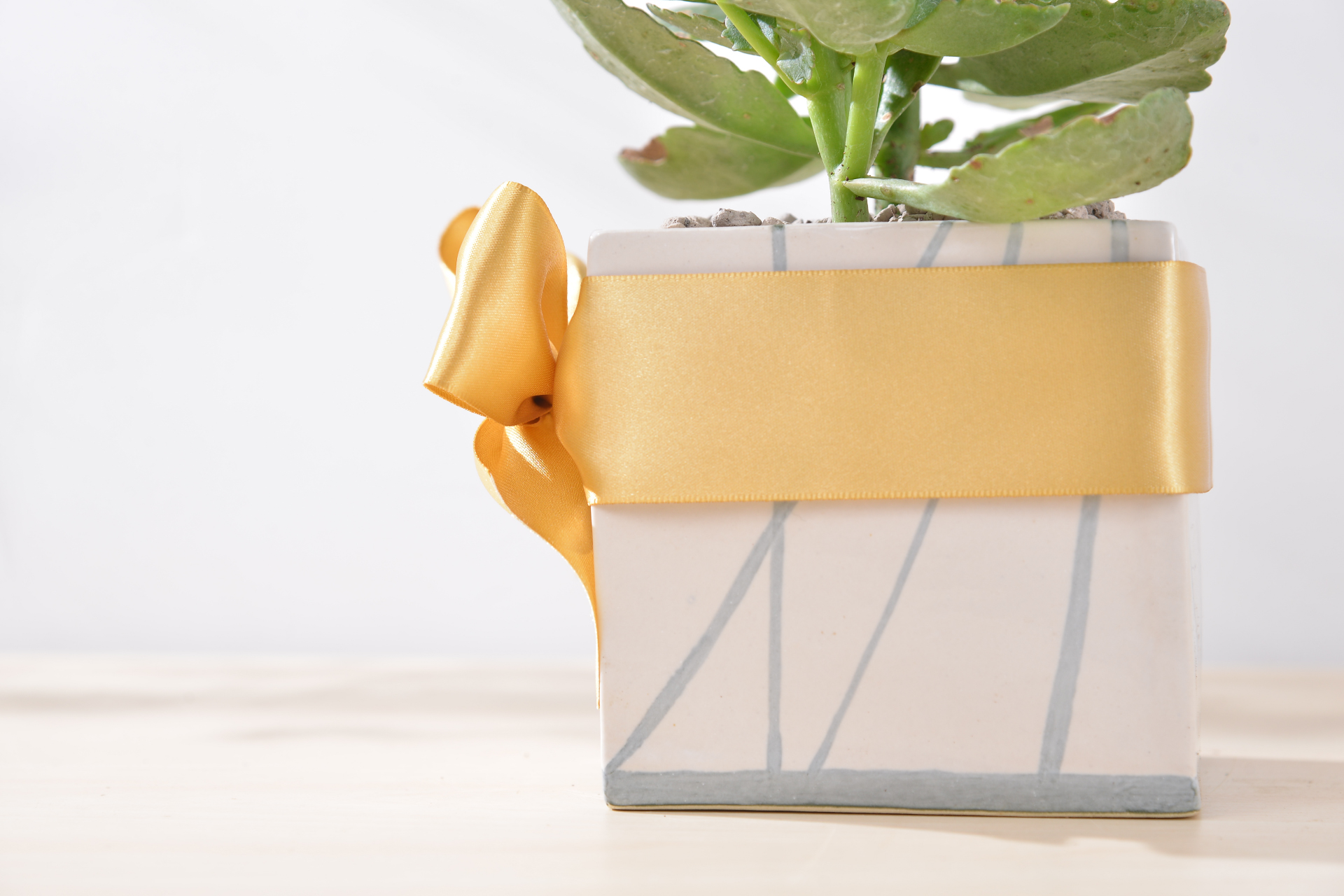 長壽花盆栽 - 簡約方盆組 3工作區域 1 複本 3