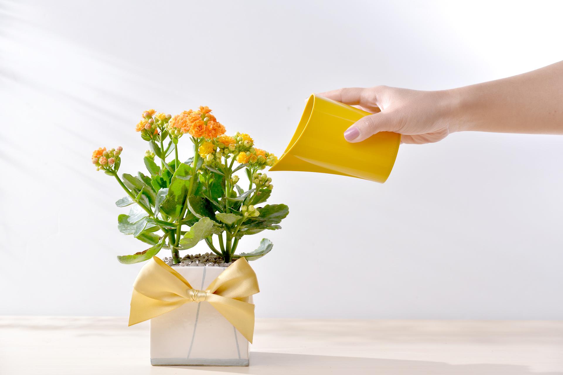 長壽花盆栽 - 簡約方盆組 3工作區域 1 複本 5