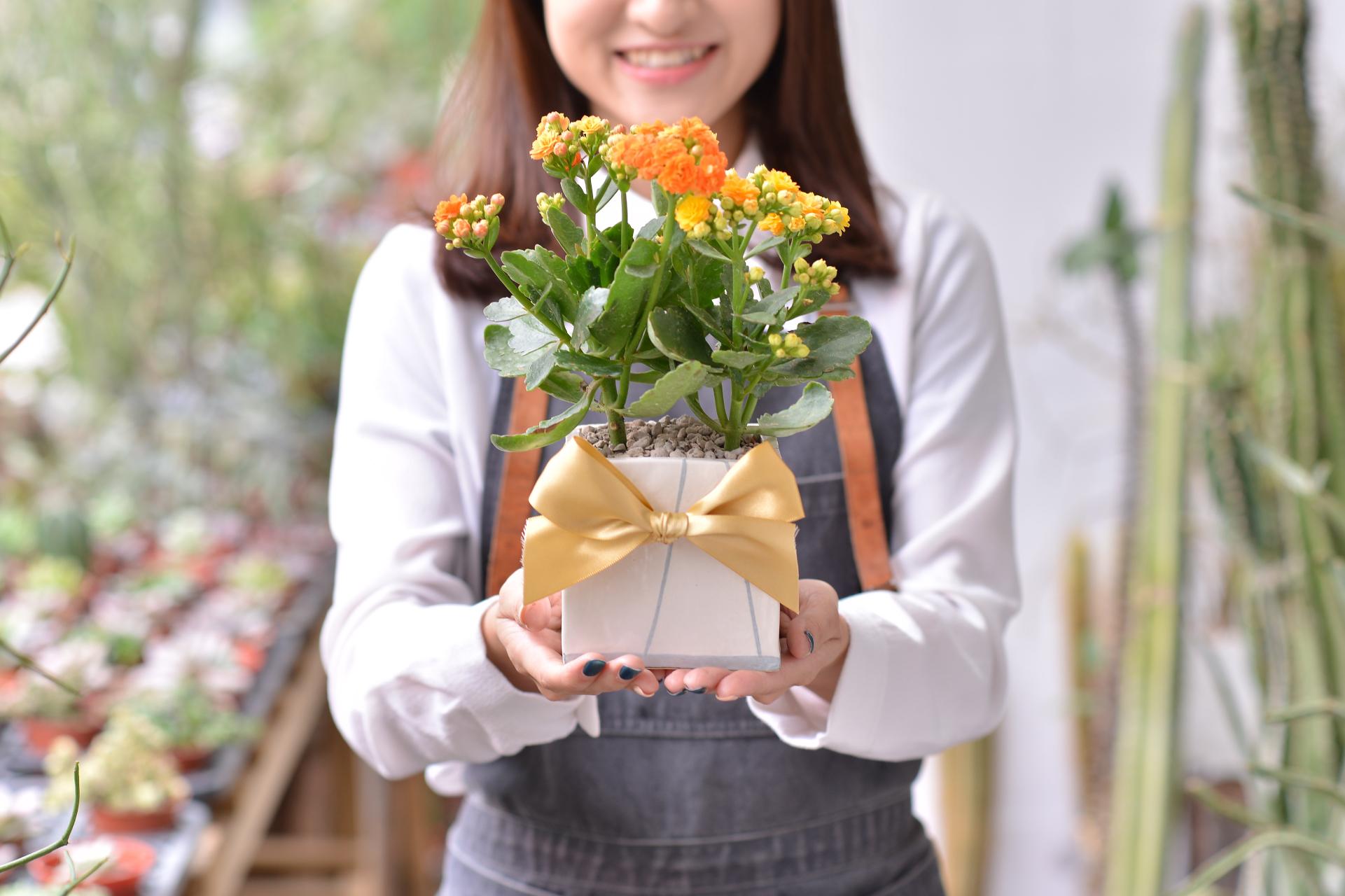 長壽花盆栽 - 簡約方盆組 3工作區域 33