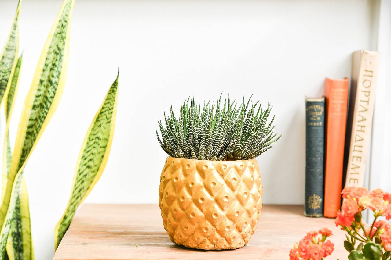 旺來盆栽送高雄,讓高雄的好朋友也可以感受到台灣設計師的創作,以及多肉植物的美好,一份禮物不只是暫時的花禮,更是可以茁壯變大的植栽