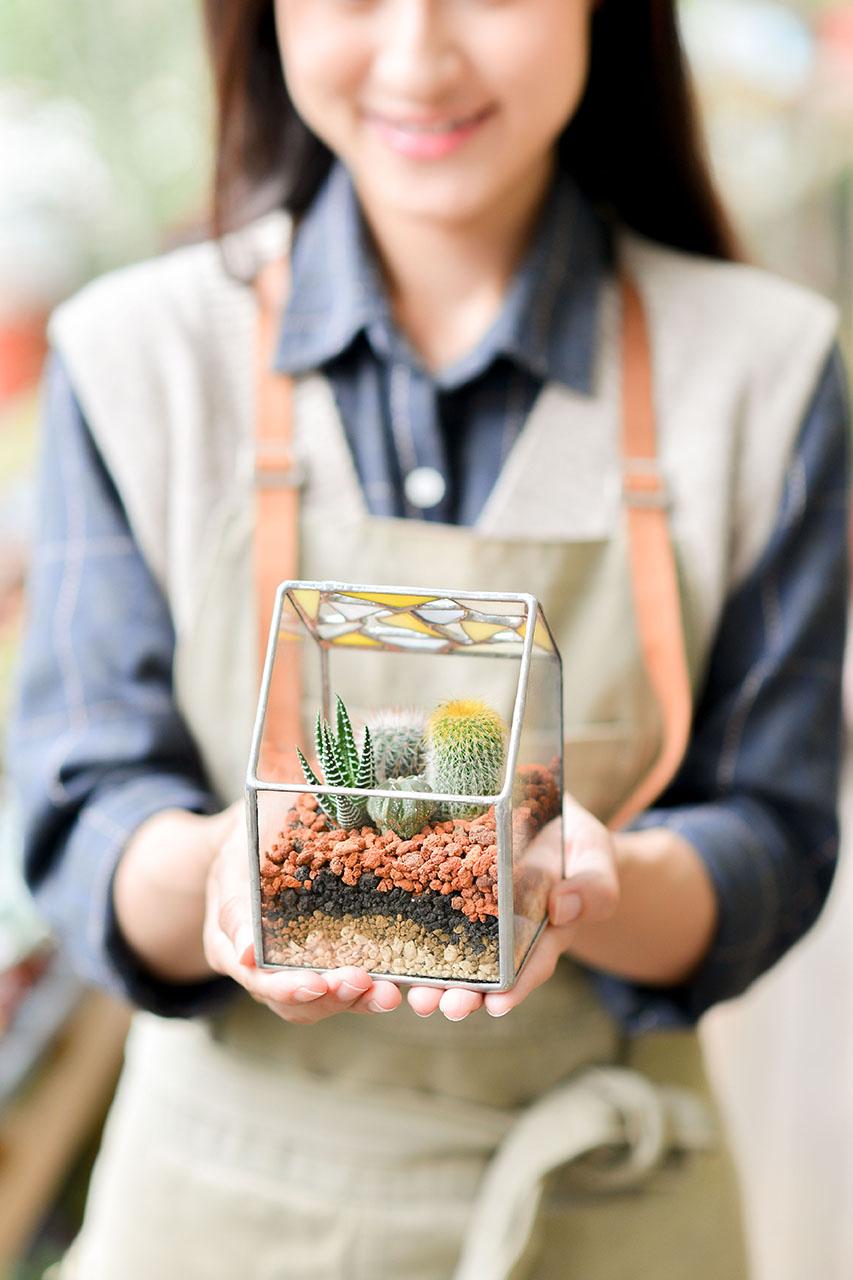 仙人掌溫室小花園 璃光之間 黃 直式