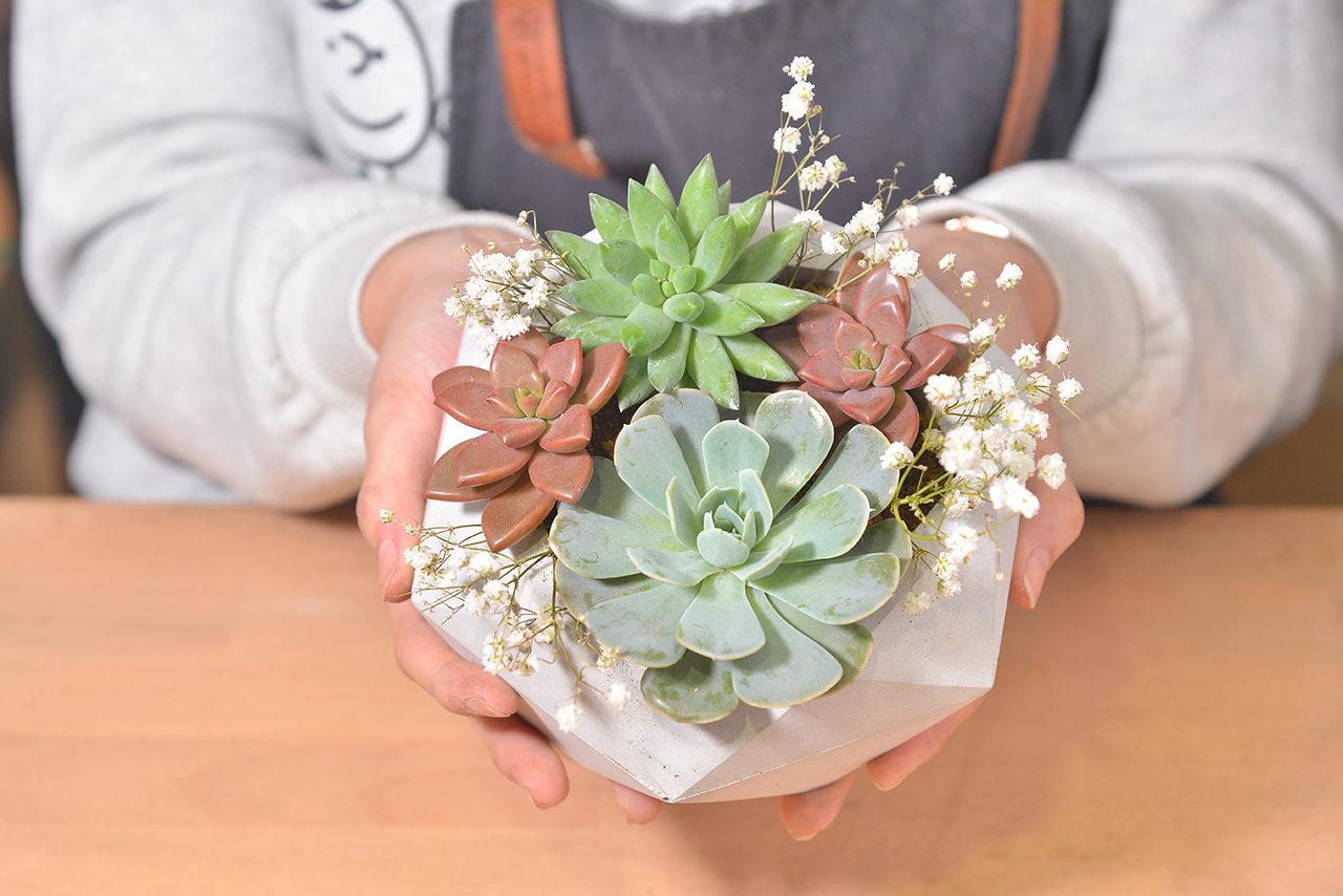 多肉植物花束變成盆栽的方法