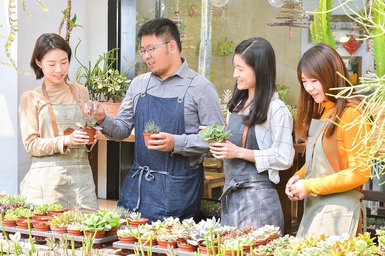 多肉植物繁殖教學