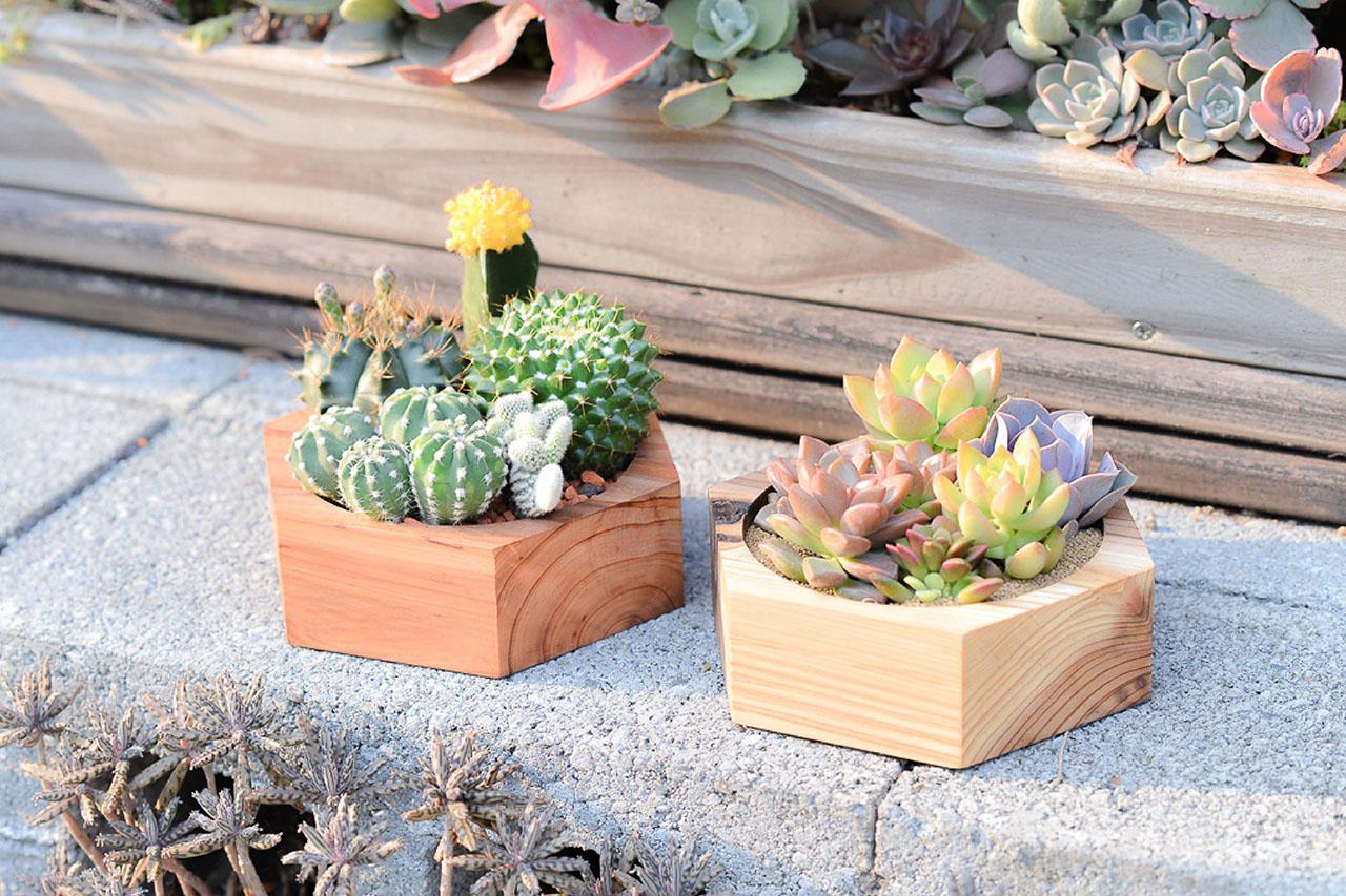 木頭盆栽與水泥磚