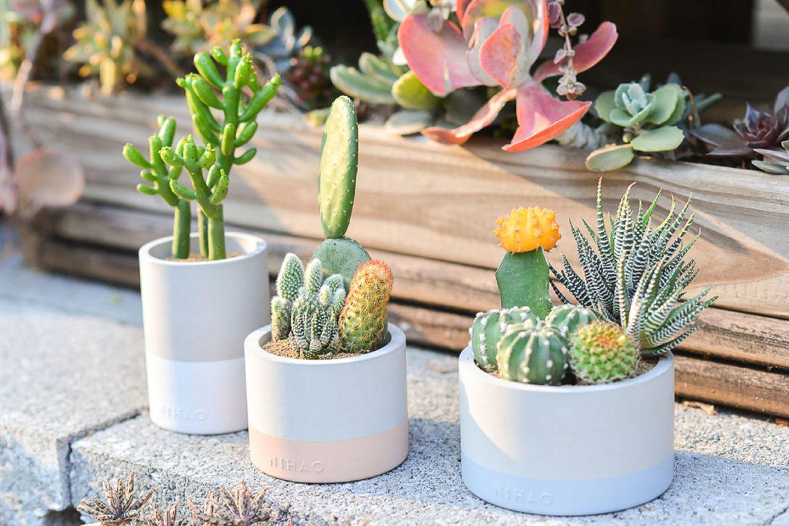 水泥設計盆栽放在花園