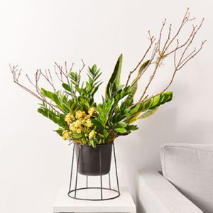 金錢樹盆栽 - 黃金組盆 金錢木1 1280x853 02