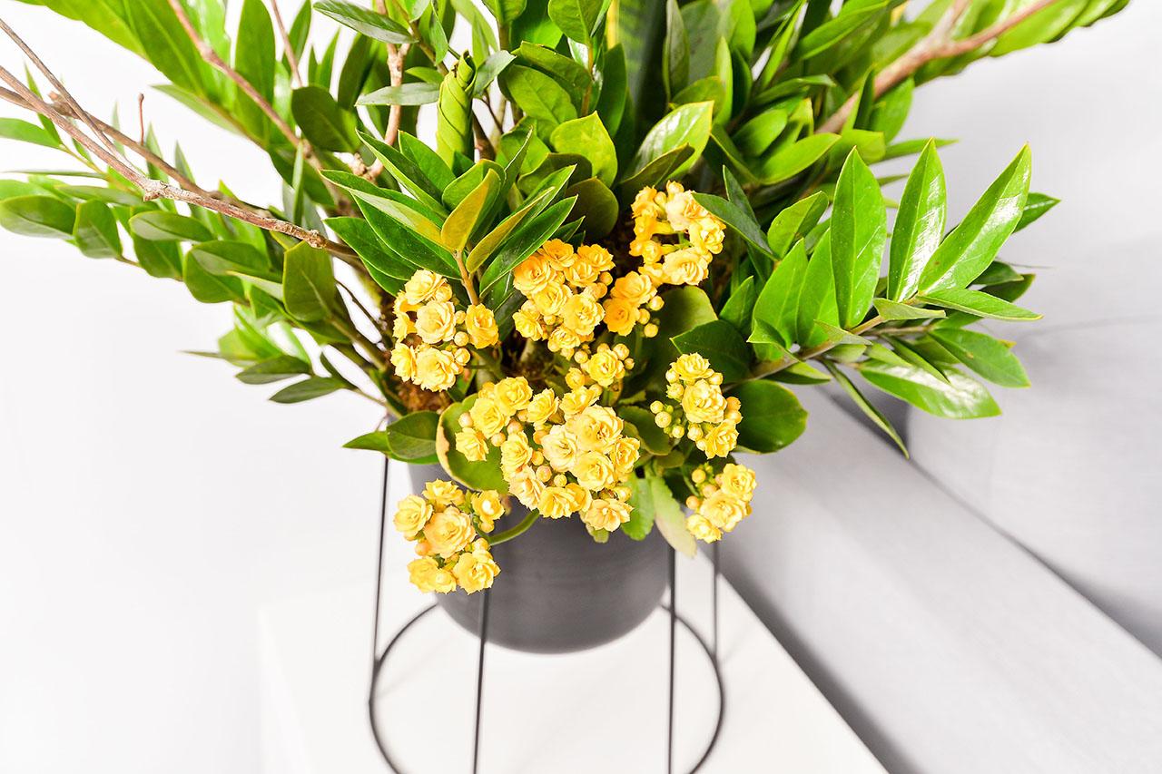 招財盆栽內有長壽花、金錢樹、虎尾蘭