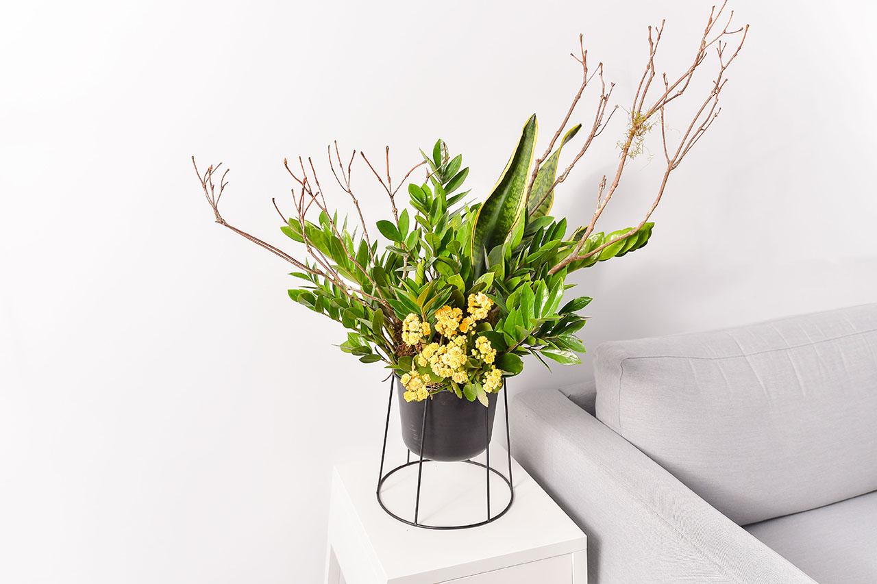 金錢樹盆栽 - 黃金組盆 金錢木1 1280x853 07
