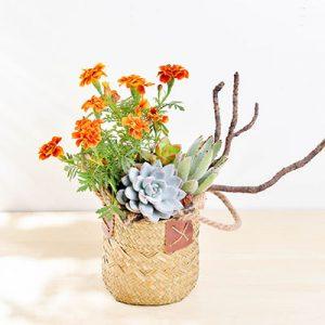 春天的花藝組盆