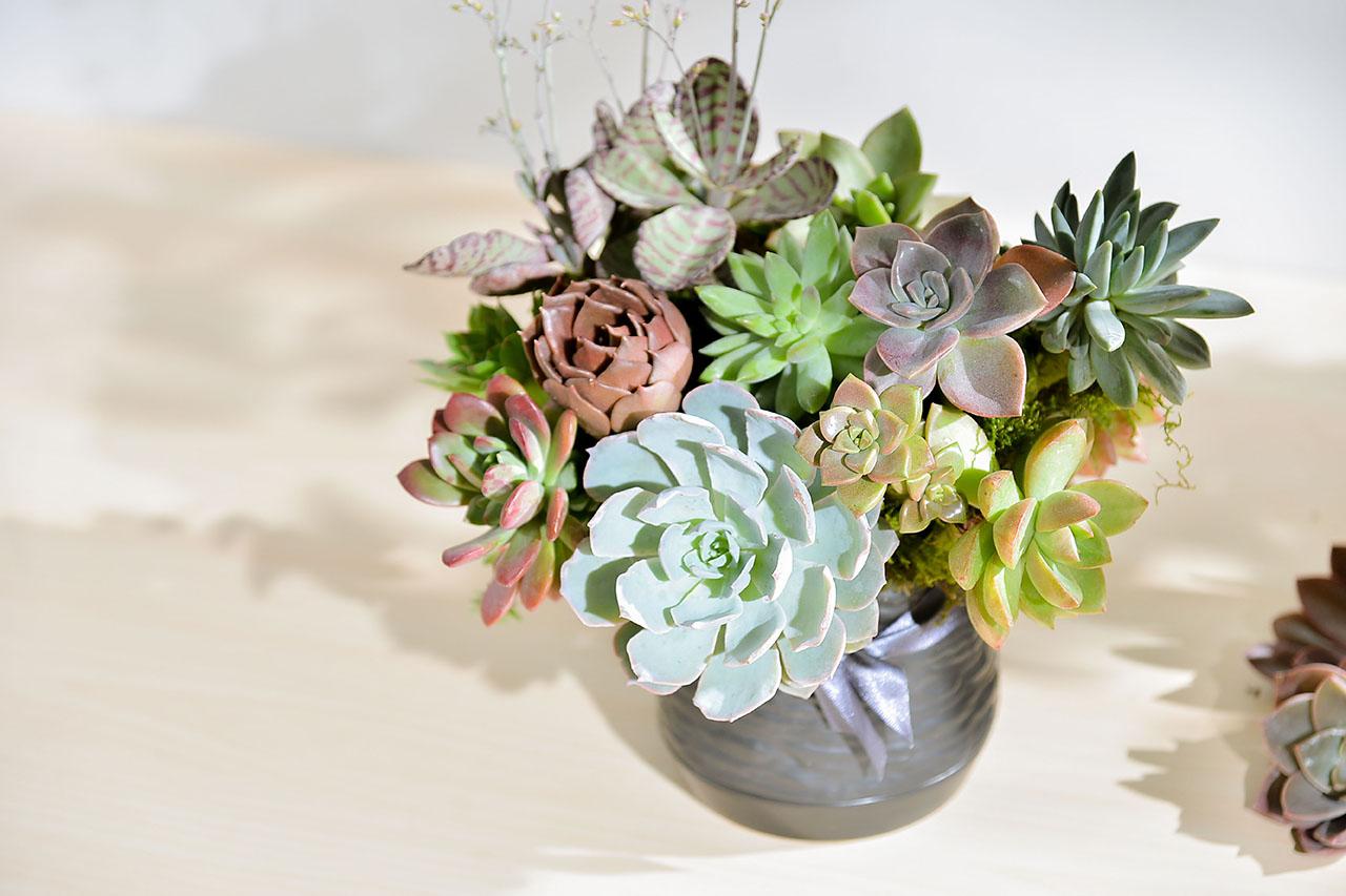 [ 花藝課程 ] 雋永之光:多肉盆花 5