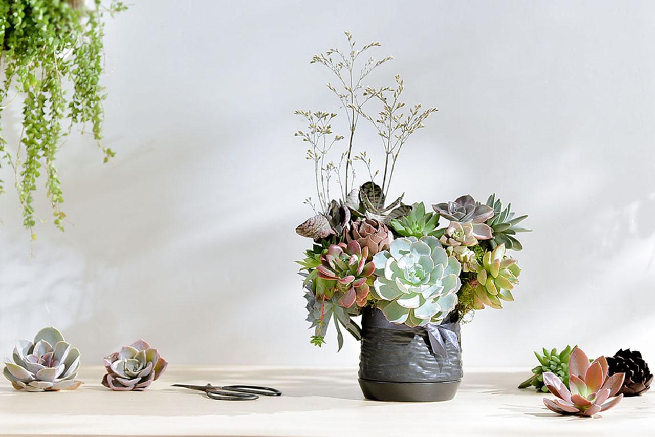 [ 花藝課程 ] 雋永之光:多肉盆花 6