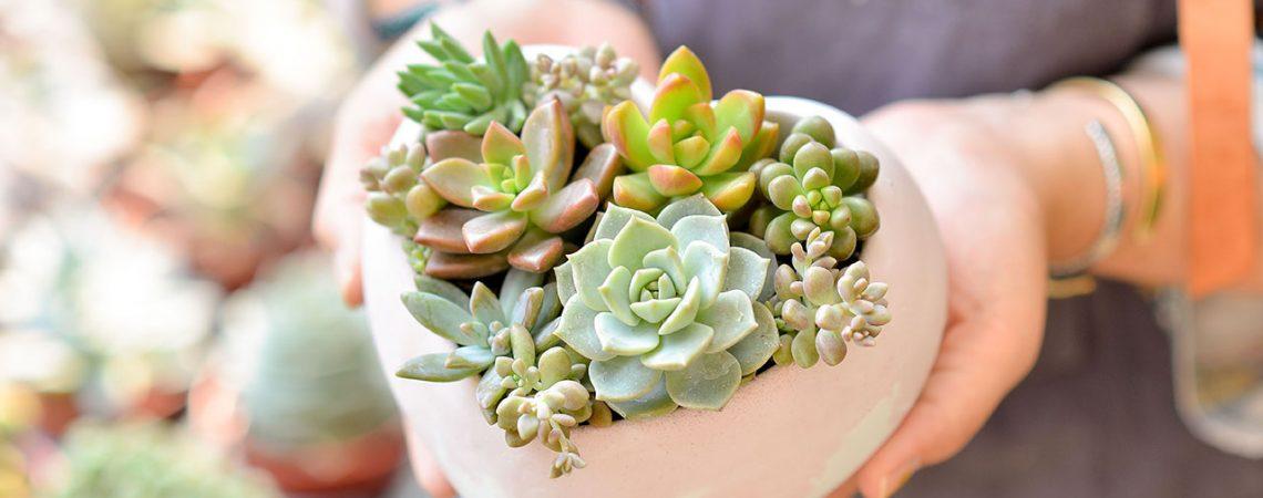 植物照顧教學&養護方案介紹 心心相印2