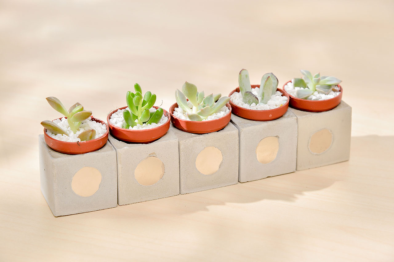 磁鐵盆栽讓盆栽收納有更多可能性
