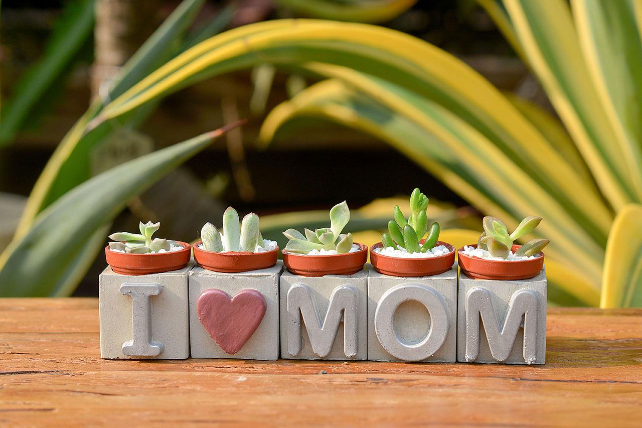 水泥盆栽與母親節的結合