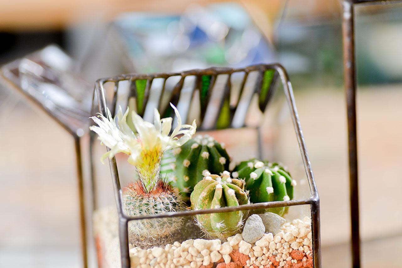 玻璃鑲嵌後加入多肉植物及仙人掌成為盆栽