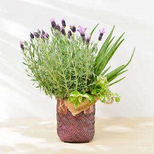 花藝盆栽設計