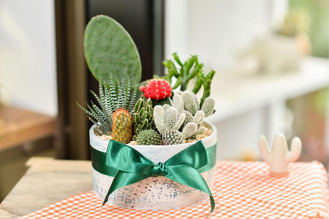 桌上型盆栽實景示意圖