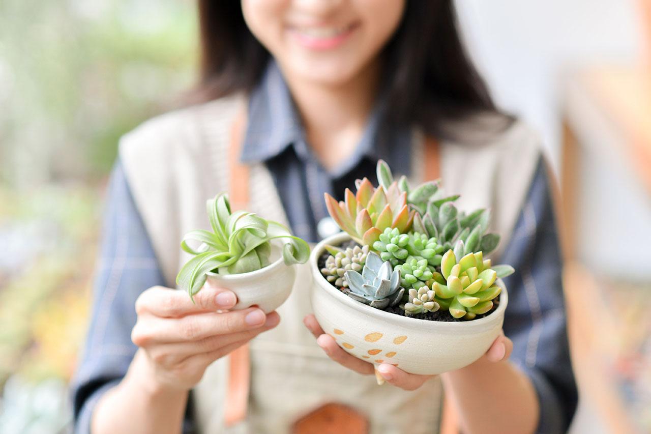 開店送禮一次送雙盆,雙植物