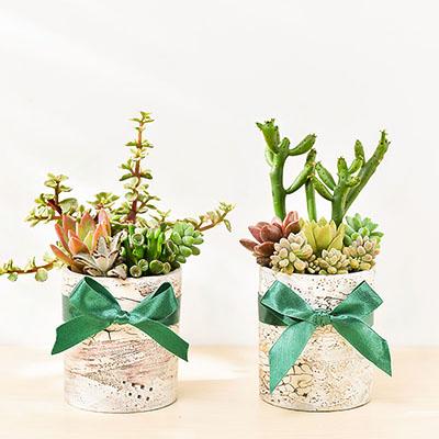 多肉植物雙盆栽,送禮組合