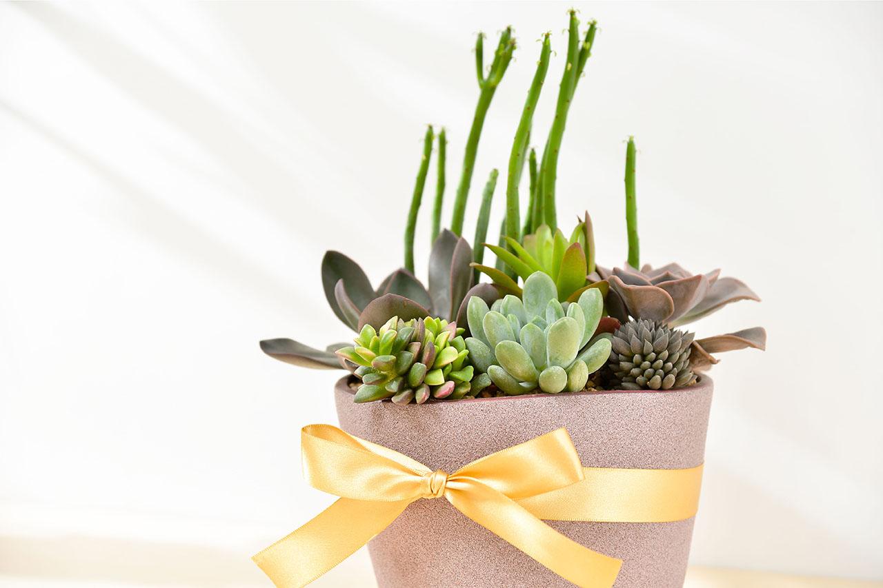 優美禮物寶盒 - 招貴人組盆 比利時紫盆 03 1