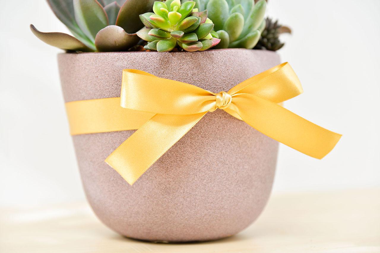 優美禮物寶盒 - 招貴人組盆 比利時紫盆 05 1