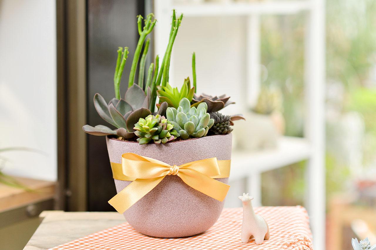 優美的金緞帶盆栽,禮品包裝讓盆栽送禮更顯優雅