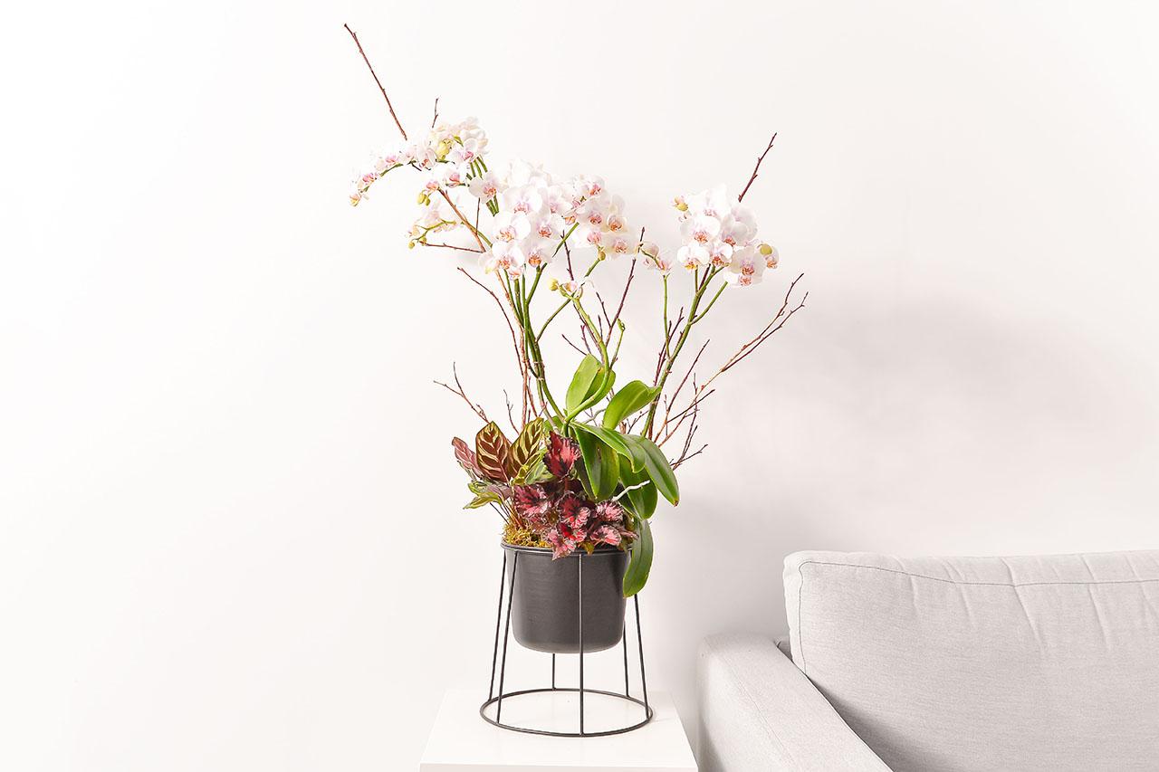 白色蘭花組盆
