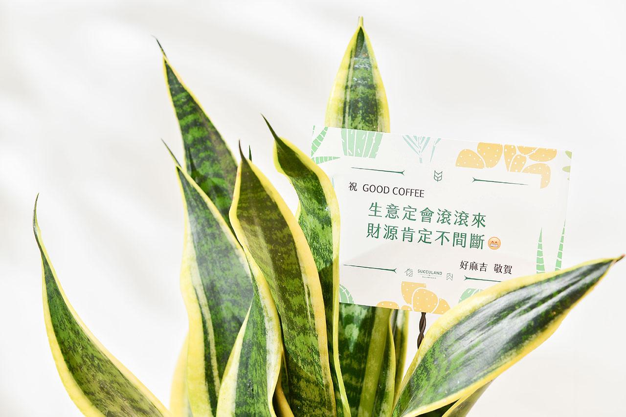 虎尾蘭祝賀卡片