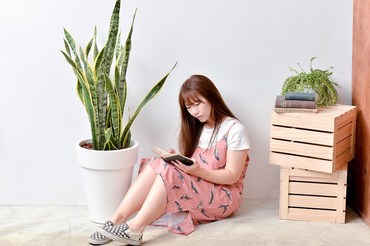虎尾蘭 – 白色落地盆栽 5