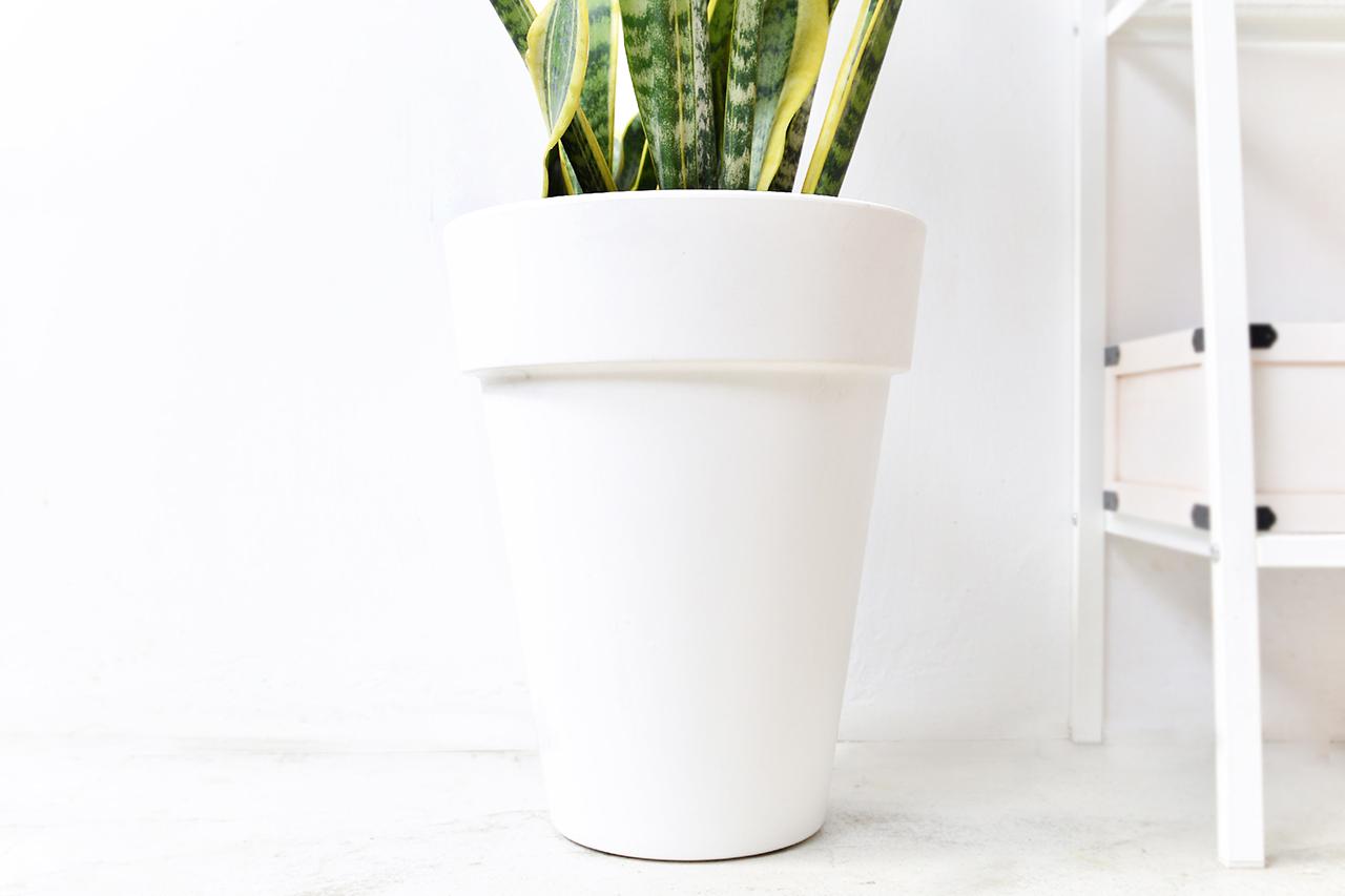 虎尾蘭 – 白色落地盆栽 4