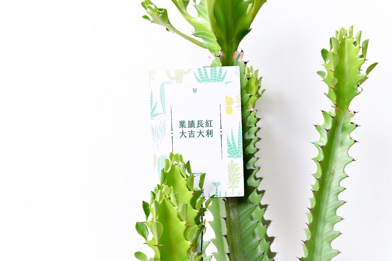 龍骨-白色落地盆栽 7