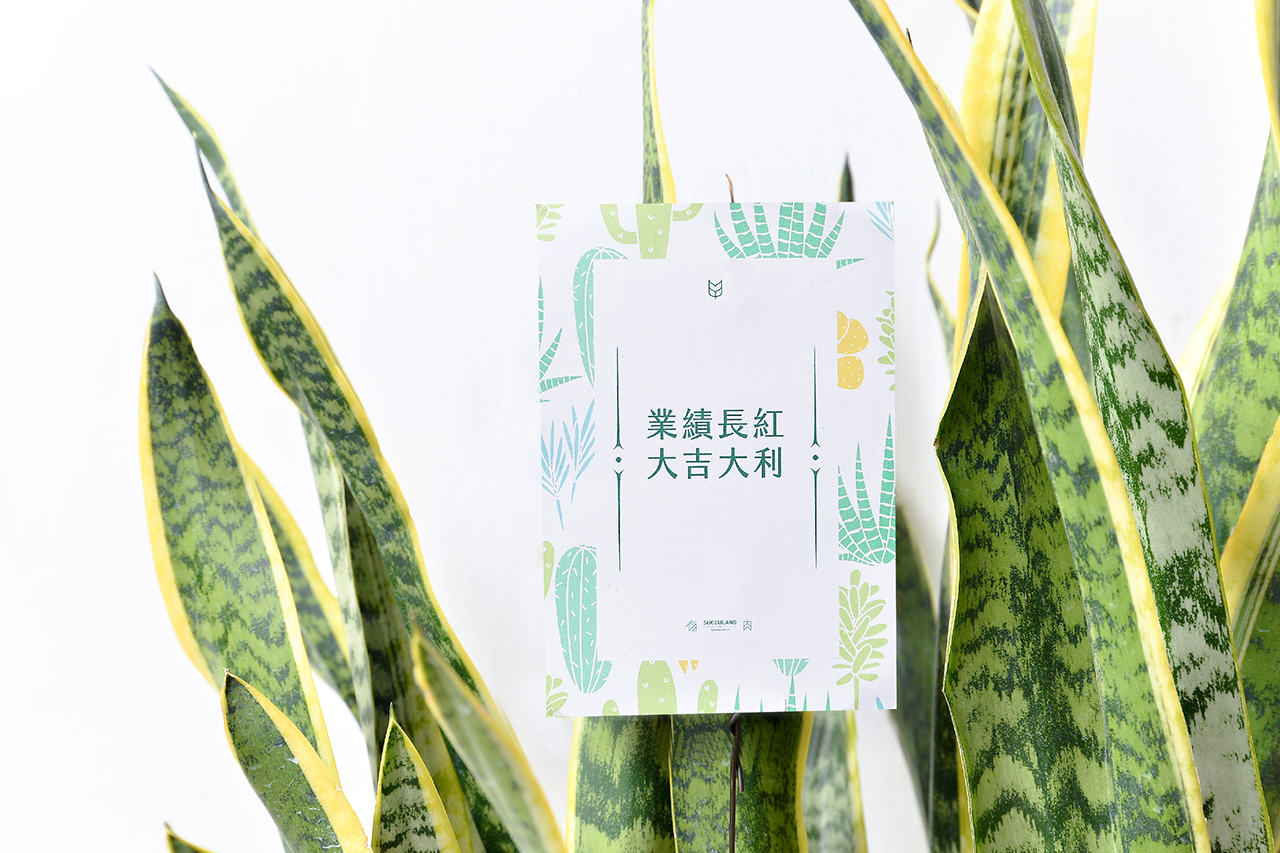 虎尾蘭-鐵灰色落地盆栽 (附接水盤) 8