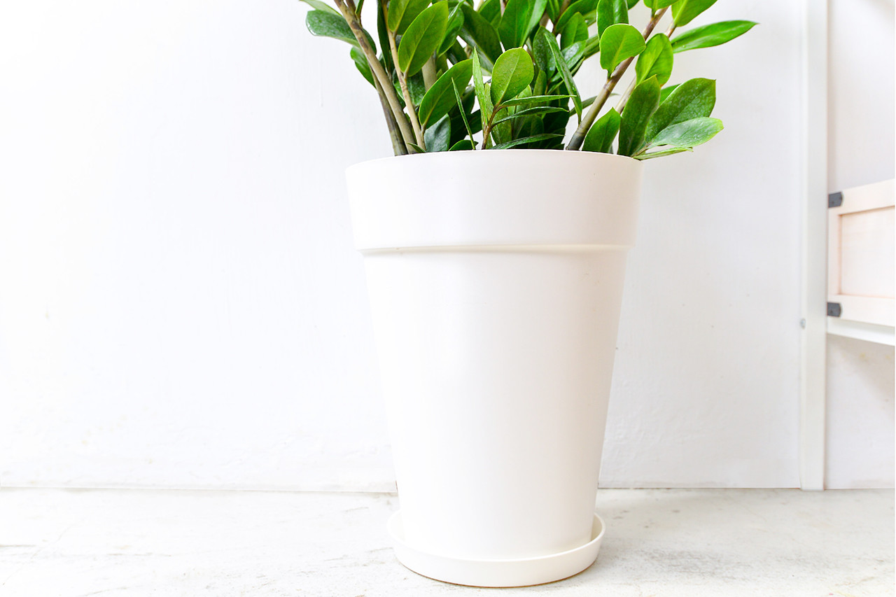 金錢樹-白色落地盆栽 (附接水盤) 4