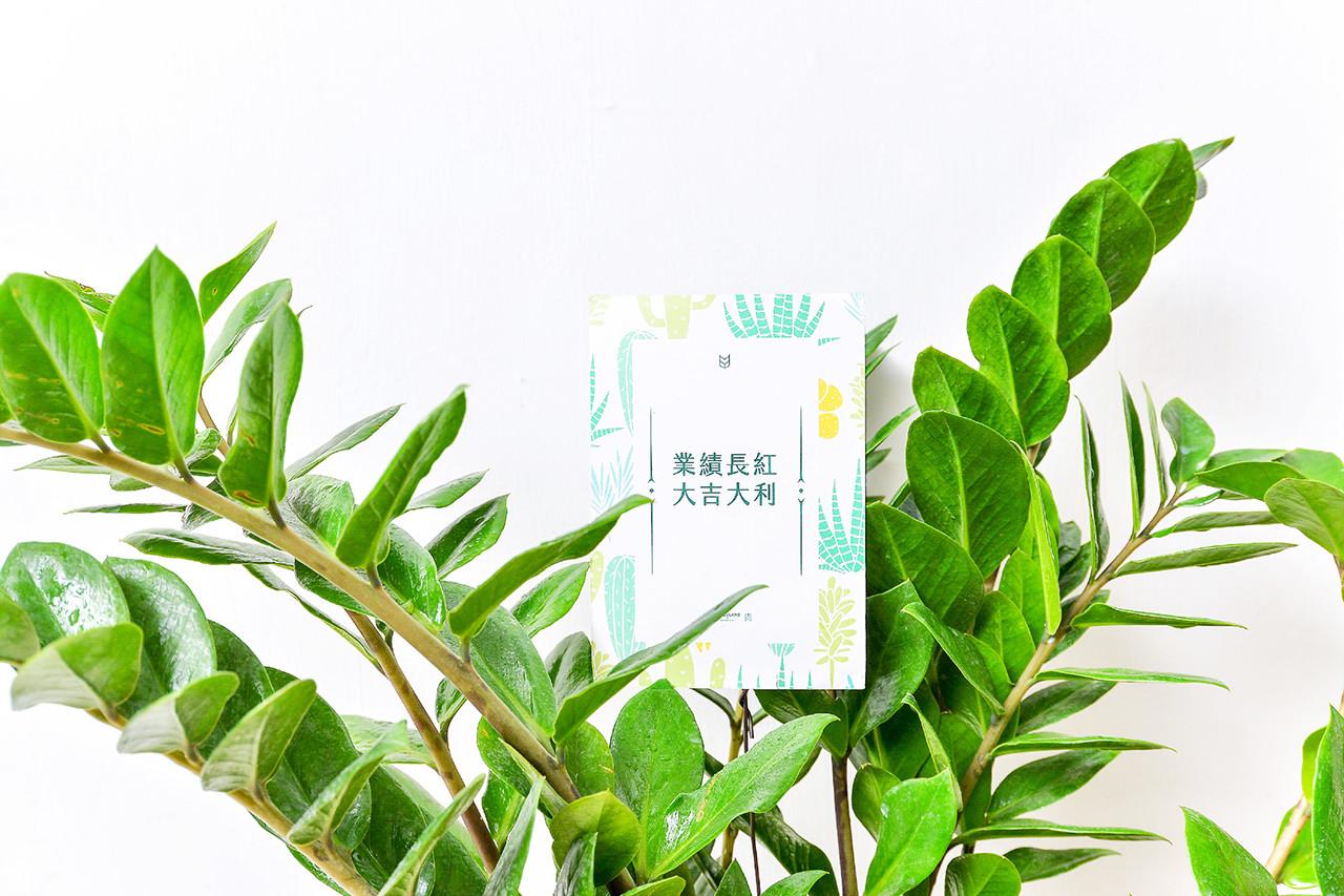 金錢樹-湖水綠落地盆栽 7