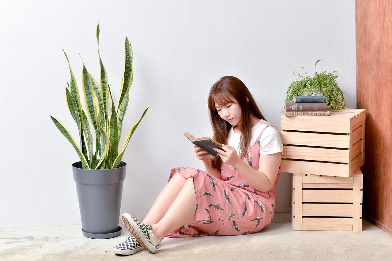 虎尾蘭-鐵灰色落地盆栽 (附接水盤) 5