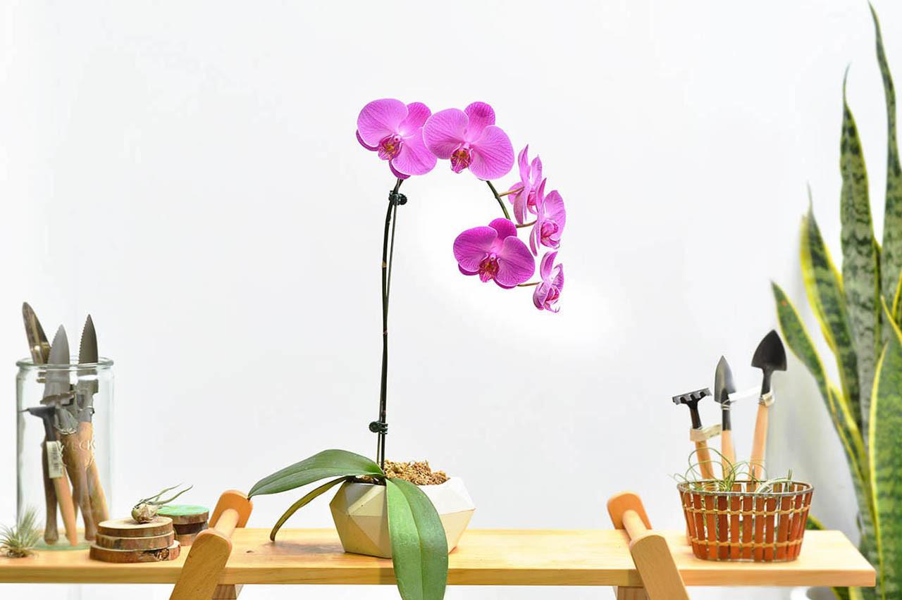 台灣蘭花盆器